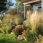 Злаки и травы в ландшафтном дизайне