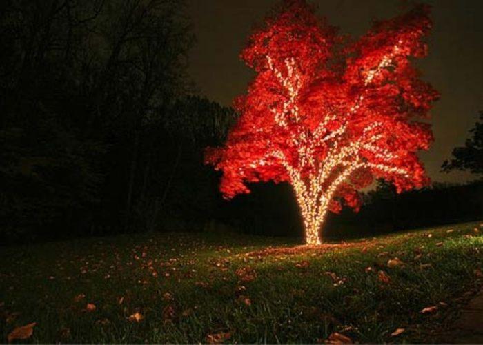 Оригинальное освещение в ландшафтном дизайне