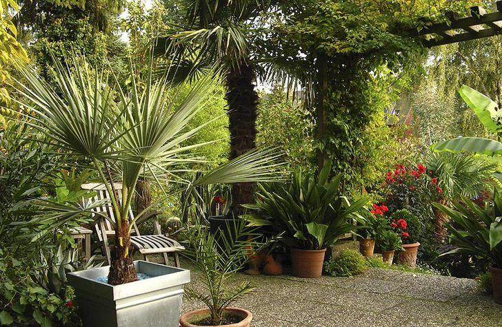 Растения и предметы интерьера средиземноморского стиля