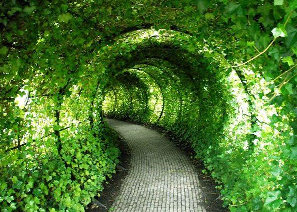 Пергола зеленый коридор