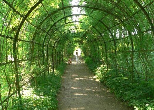 Пергола зеленый коридор своими руками