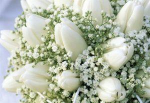 гипсофила и тюльпаны