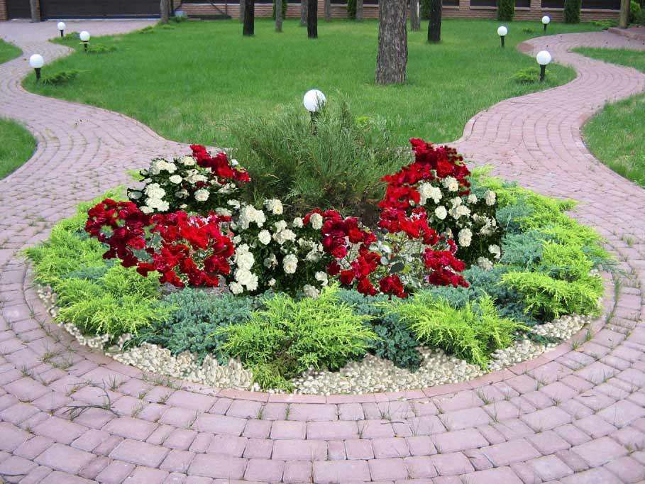 какие домашние цветы вызывают аллергию фото