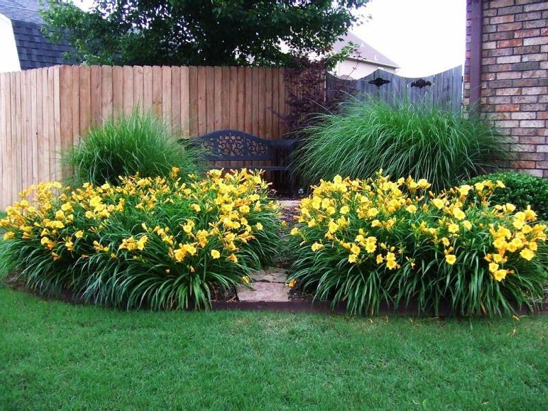 Лилейники в саду и цветнике