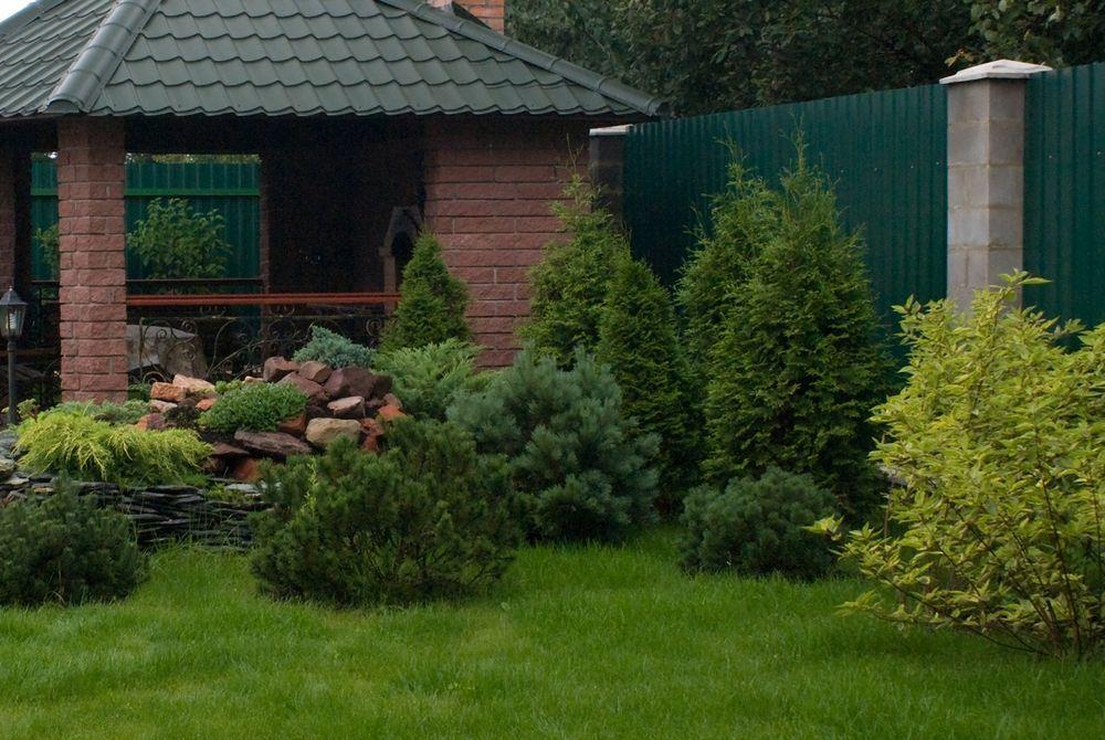 Разные виды сосны в ландшафтном дизайне Уфа