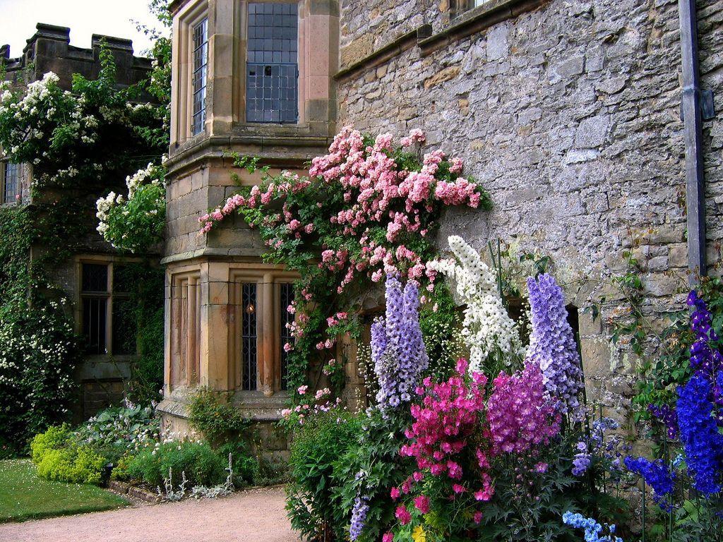 Растения в английском саду