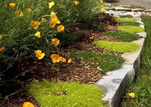 Мшанка и цветы у дорожки
