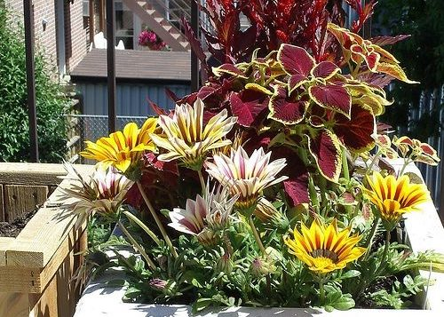 Гацания и другие растения