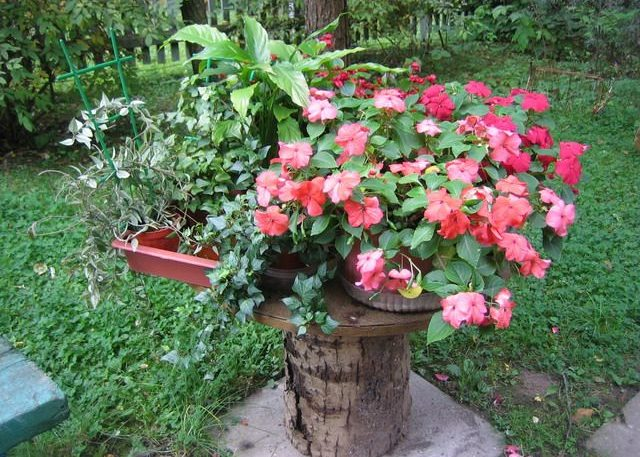 Бальзамин и другие растения