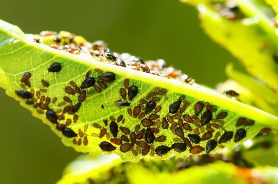 какими средствами можно очистить организм от паразитов