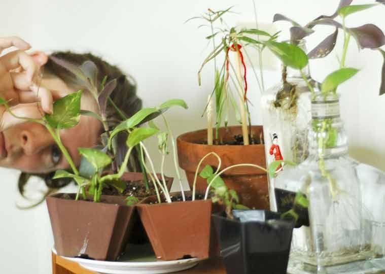 Осмотр растения