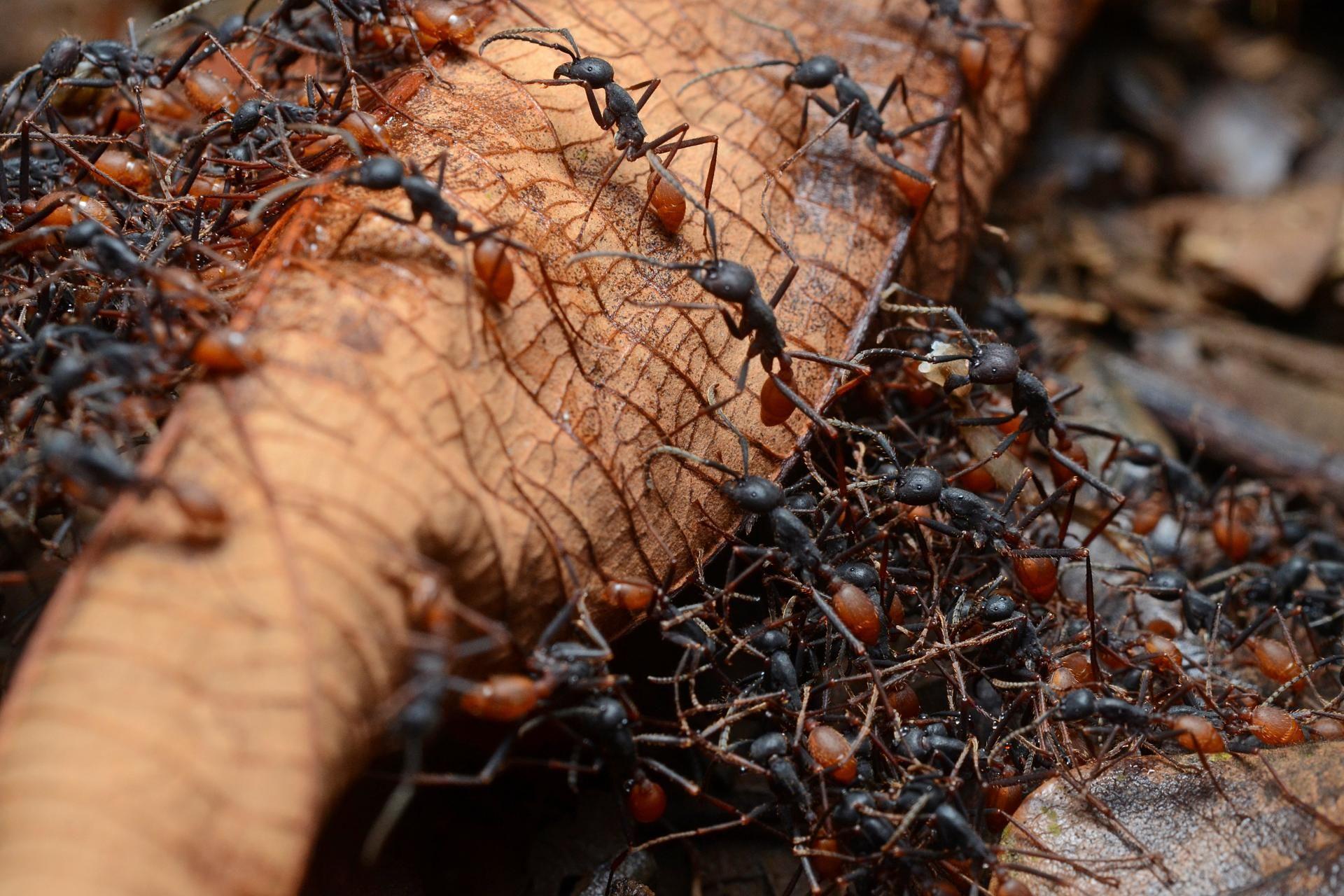 Боремся с муравьями в саду и огороде