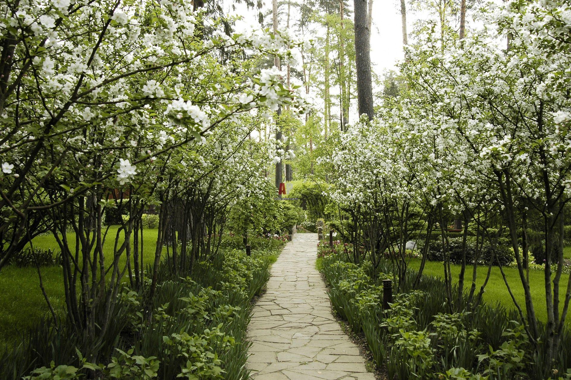Аллея цветущих яблонь фото
