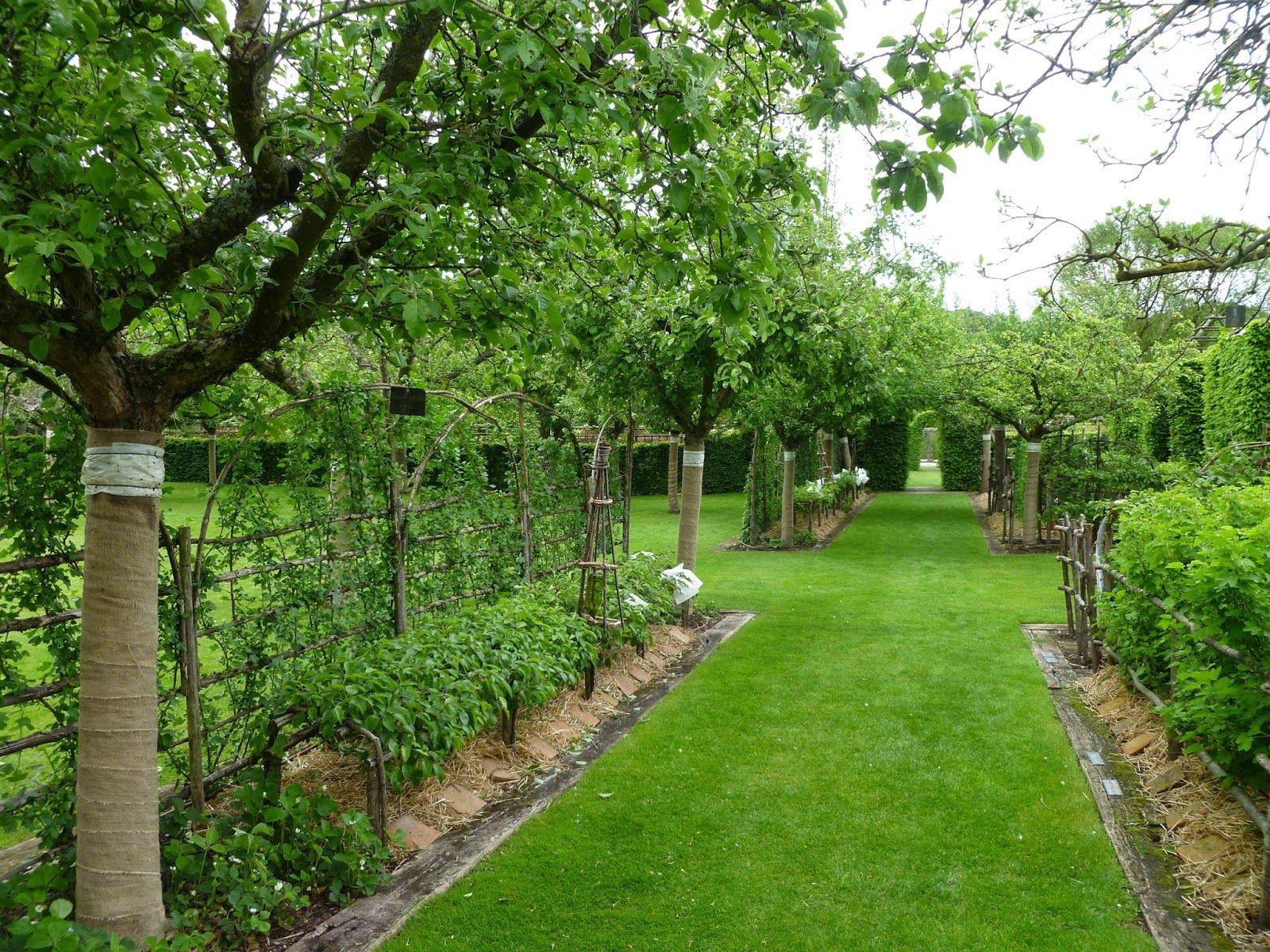 Плодовый сад на участке фото