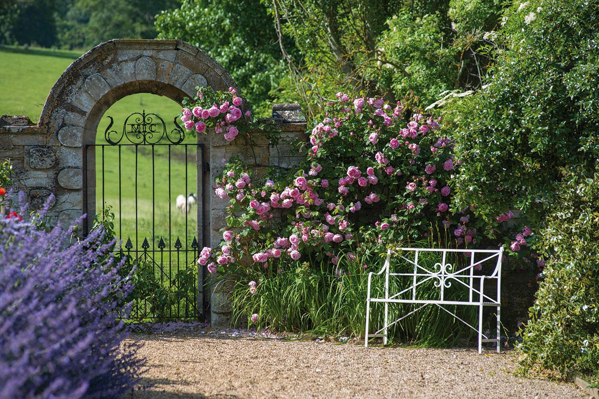 Розы в английском саду арки фото