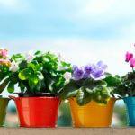 Комнатные цветущие растения в горшках с фото и названием