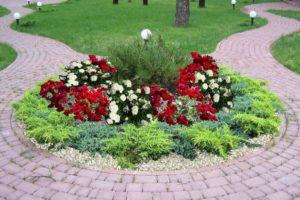 Хвойники и розы в ландшафтном дизайне
